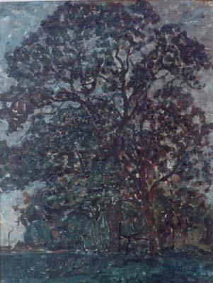 Berkenbomen op grasveld, op de achtergrond bos